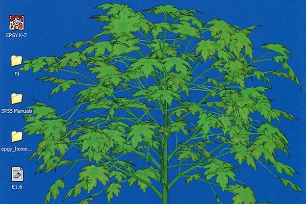 a-trees natalie jeremijenko tutorial net art